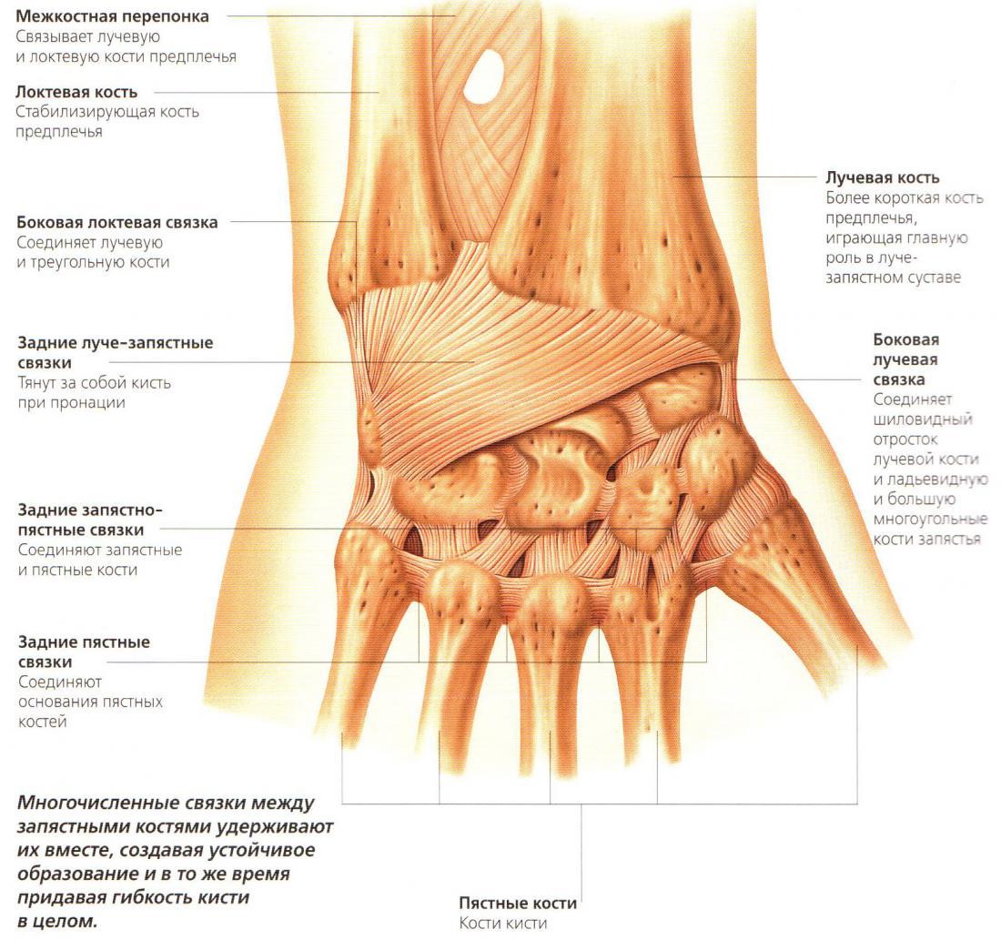 Средство от грибка ногтей на ногах аморолфин цена