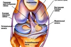 Схема коленного сустава человека