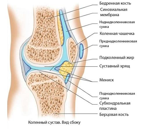 Киста мениска коленного сустава: симптомы и лечение, основные ...