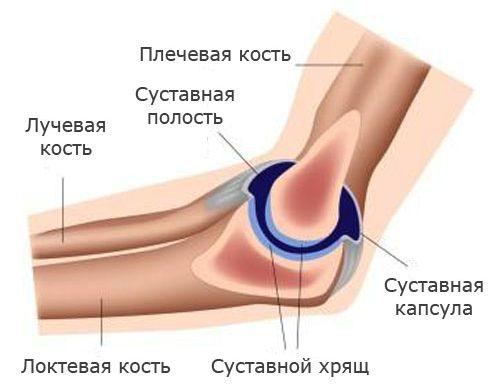 Увеличение предстательная железа лечение народными средствами