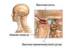 Расположение челюстно-лицевого сустава