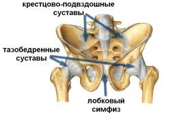 Тазобедренный сустав