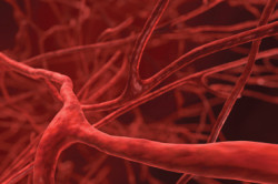 Снятие мышечного спазма расширением кровеносных сосудов