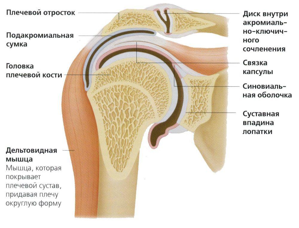 плечевой сустав укрепить