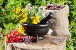 Терапия лекарственными травами при артрозе
